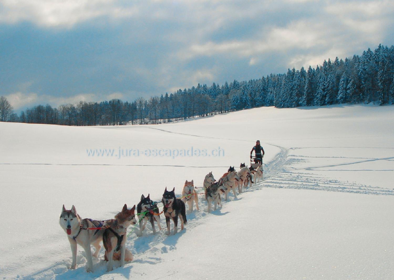 Chiens de tra neau balade et initiation hiver for Balade chien de traineau doubs